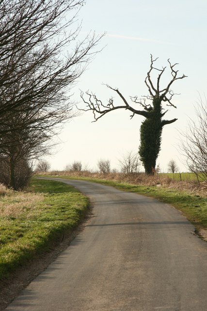 The Ent on Dunflat Road
