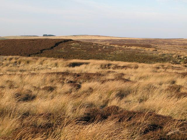 Burntridge Moor (2)