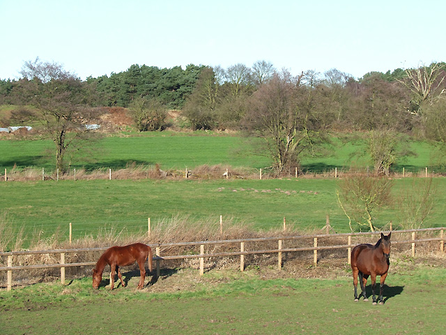 Grazing by Spittle Brook, Staffordshire