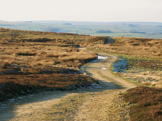 The track down to Allendale