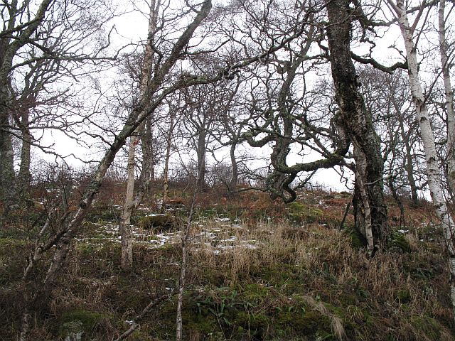 Woodland, Braes of Nuide
