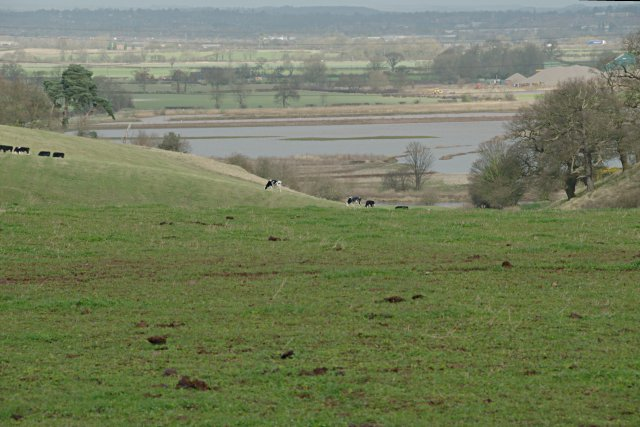 Pasture beside the Trent