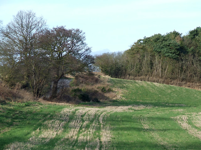 Field and Coppice west of Ashwood, Staffordshire