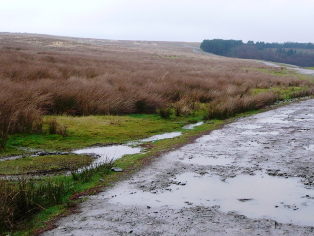 Track across the moors
