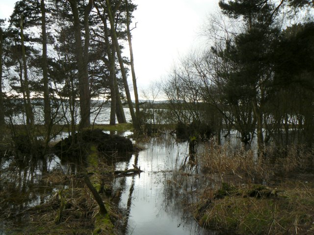 Wetlands by the Loch
