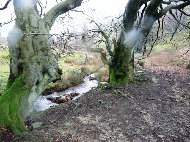 Trees in Cwm Sychan