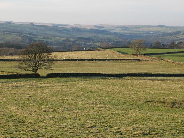 Pastures above Shieldburn Hall (3)