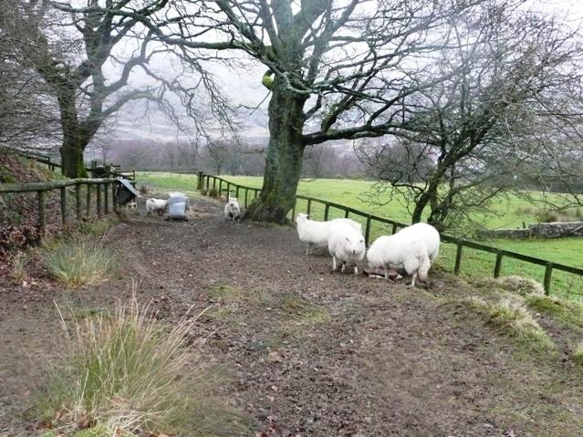 Footpath to Abersychan