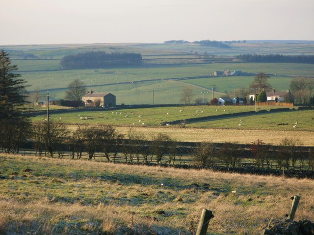 Pastures above Lonkley Head