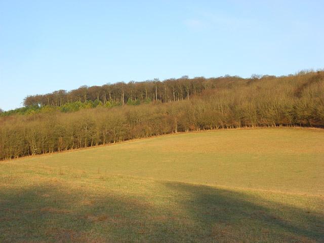 Shotridge Wood
