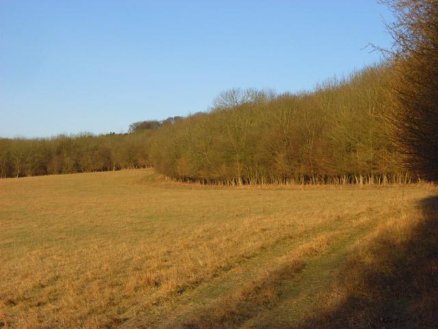 Barnfield Hanging Wood