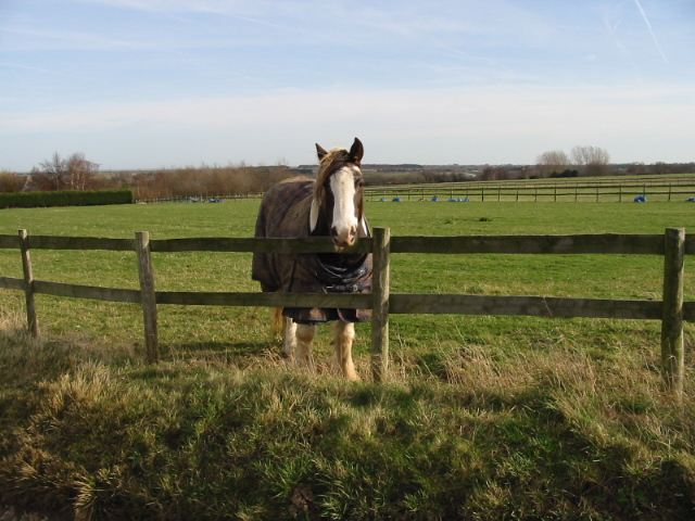 Inquisitive horse in paddock on Marley Lane