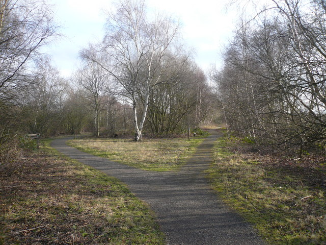 Potteric Carr Nature Reserve - Parting of the Ways