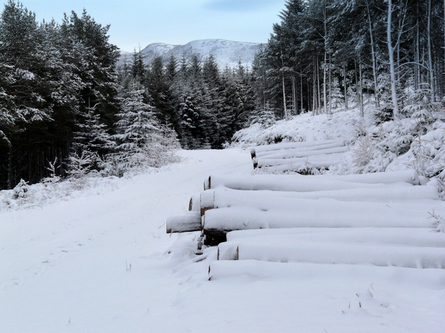 Log pile in Struie Wood