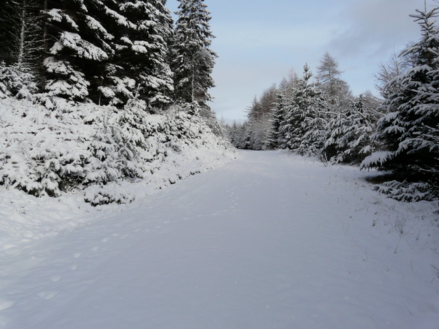 Forestry road in Struie Wood