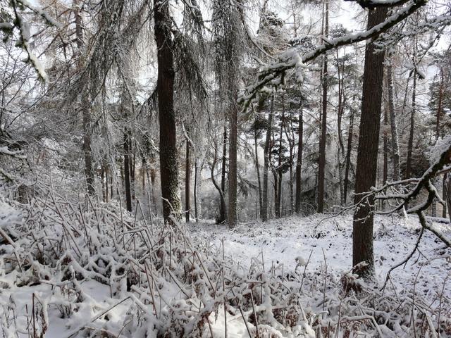Winter in Struie Wood