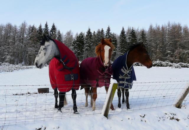 Ponies near Dalnaclach