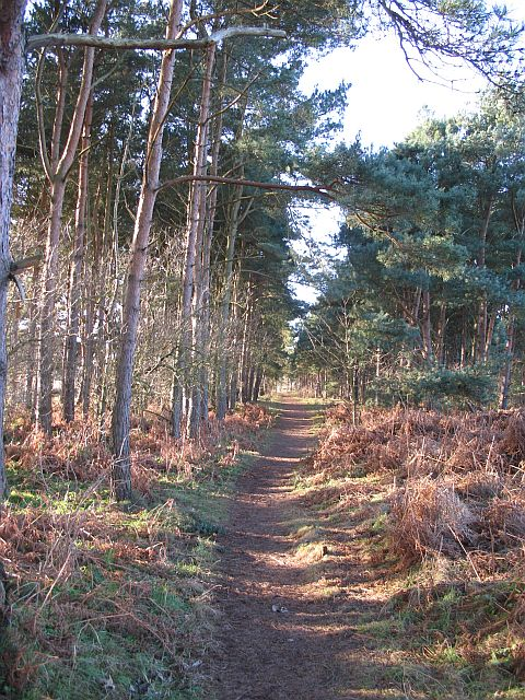 Hedderwick Hill Plantation