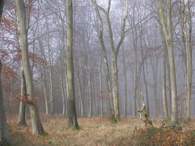 Mist among the trees, Vernditch