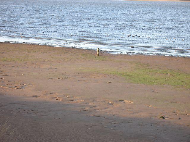 Mudflats, Tyne Estuary