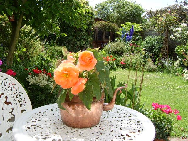 Rear Garden EN11 year 2007
