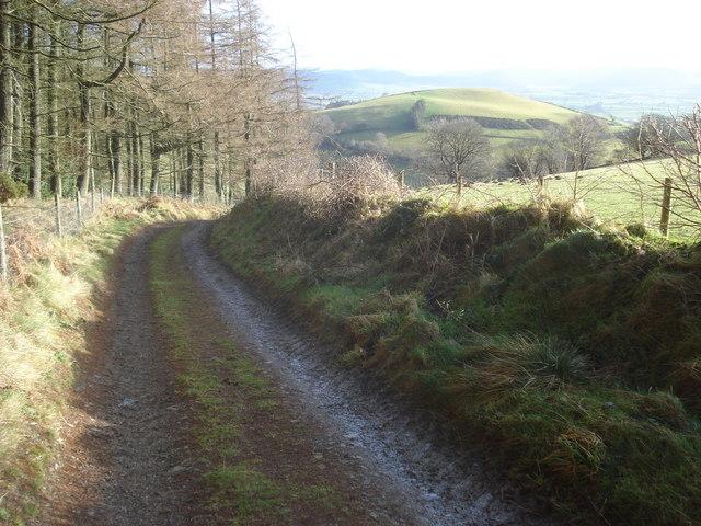 Bridleway at the edge of Cwm Broadwell Wood