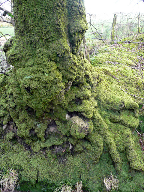 Dripping with moss