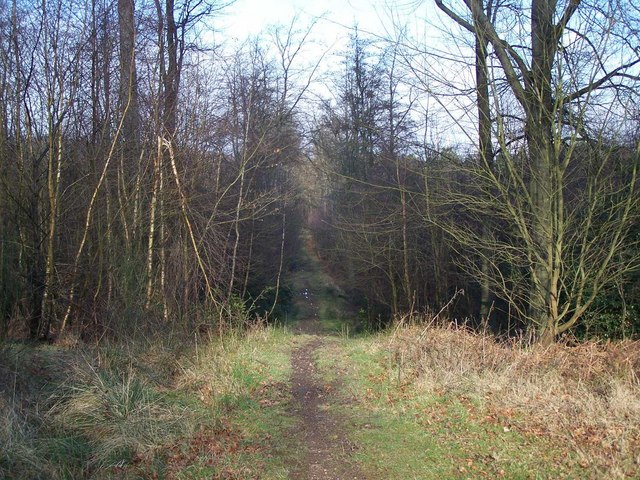 Footpath In Brereton Hayes Wood