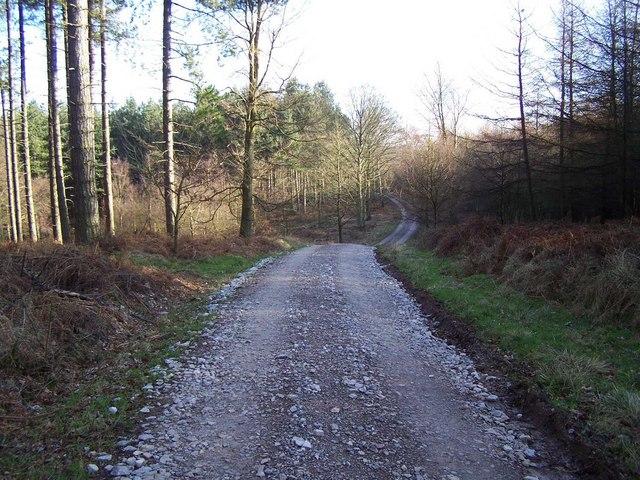 Beaudesert Old Park