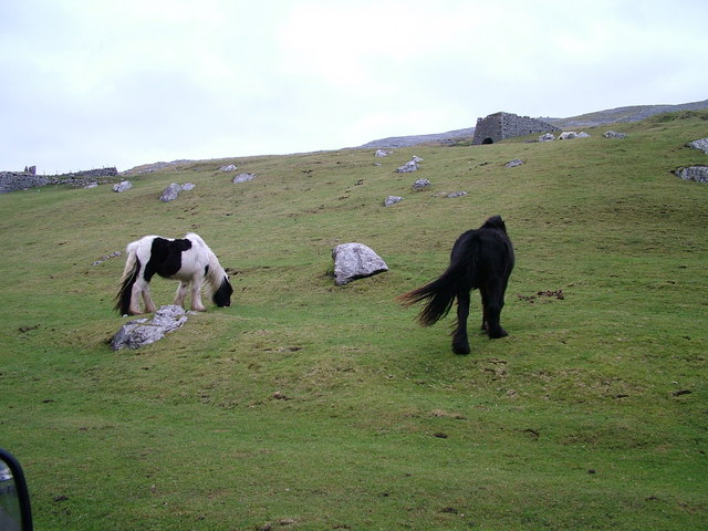 Fell ponies and Lime Kiln