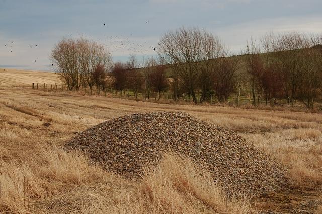 Woodland at Lochagan