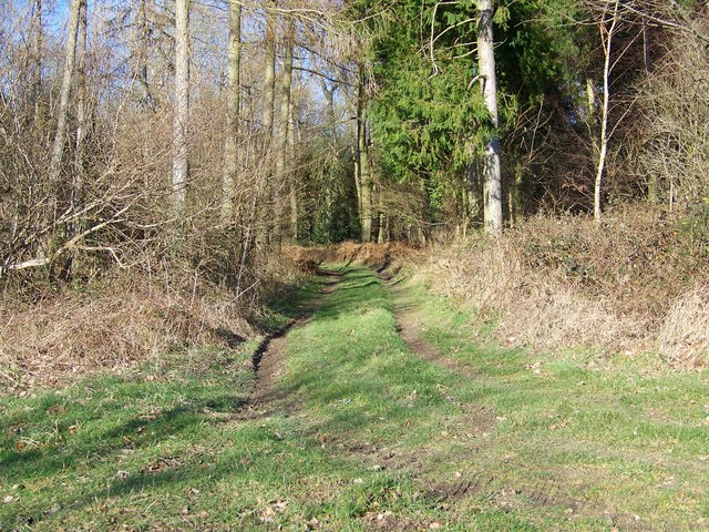 Footpath into the Wood
