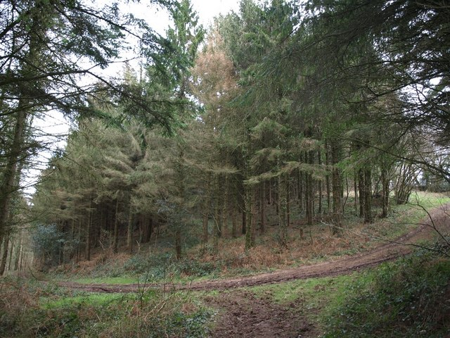 Track in Mill Wood