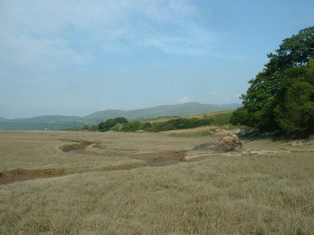The edge of the salt marsh