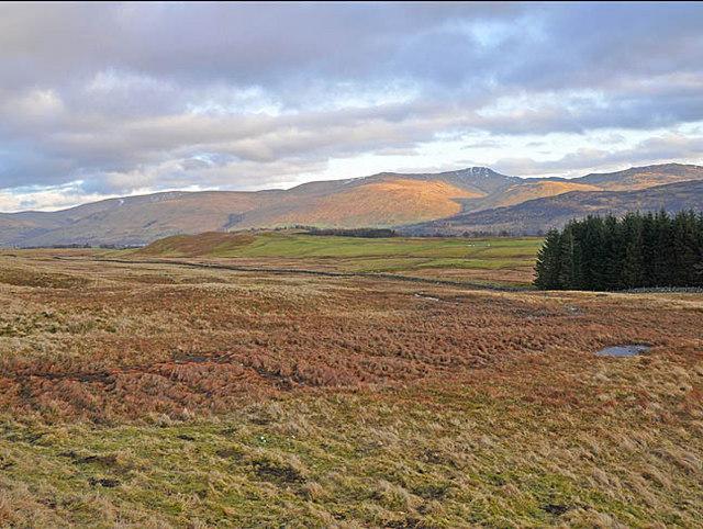 Moorland pasture near Ben Lawers