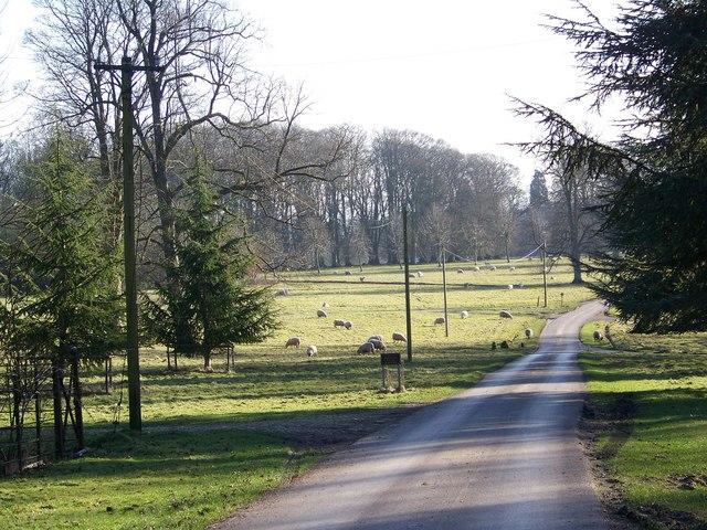 Rushmoor Park from Cuttice Lodge