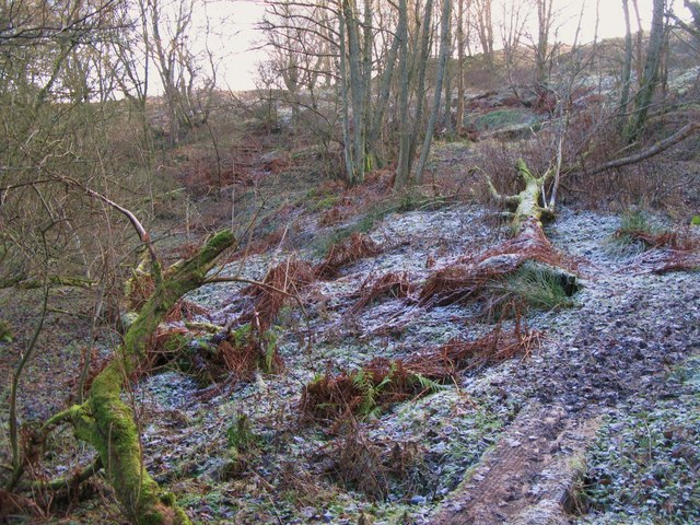 Frosty footpath above the River East Allen near The Holms