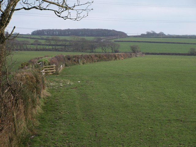 Field boundary near Nethercott