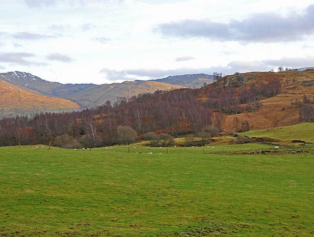 Farmland and birchwood near Balnreich