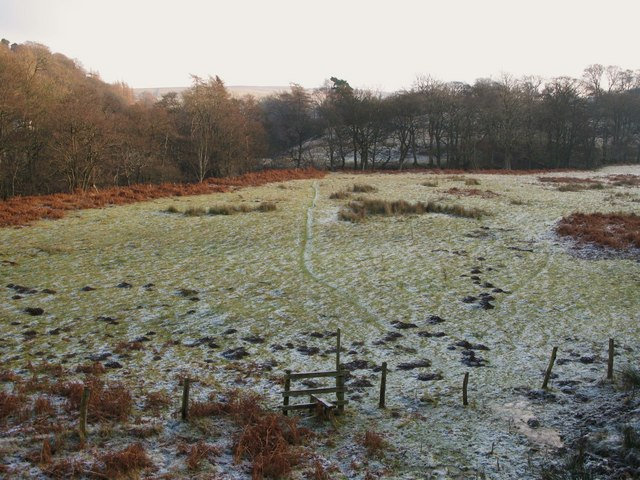 Frosty pastures south of the River East Allen (2)