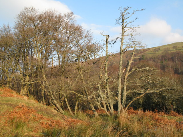 Woodland in East Allen Dale near The Holms