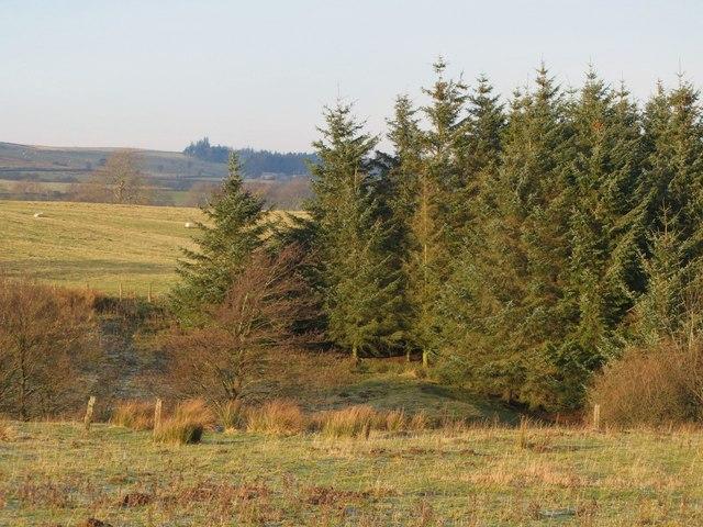 Plantation near Crowberry Hall