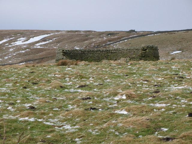Sheepfold in Longstaffs Allotment