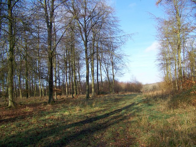 Woodland ride, Vernditch Chase