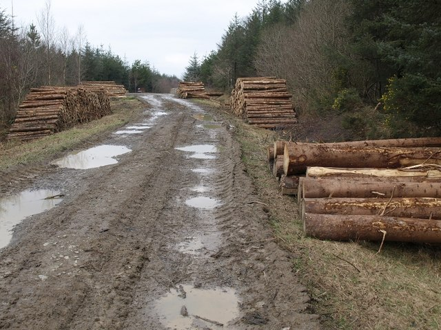 Logs, Holsworthy Woods