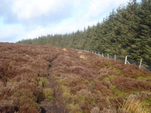 Track at the edge of Radnor Forest