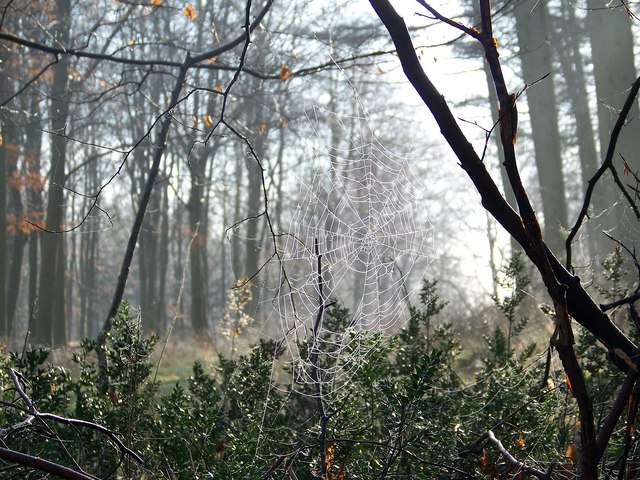 Cobweb and mist on Vernditch Chase