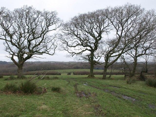 Trees near Langdon