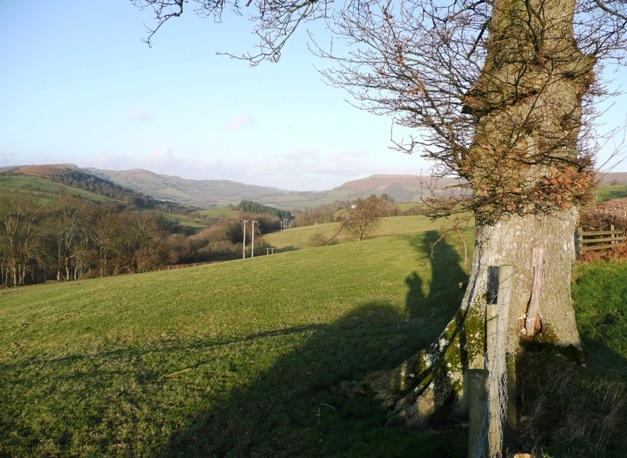 Field near Pwllgwyn