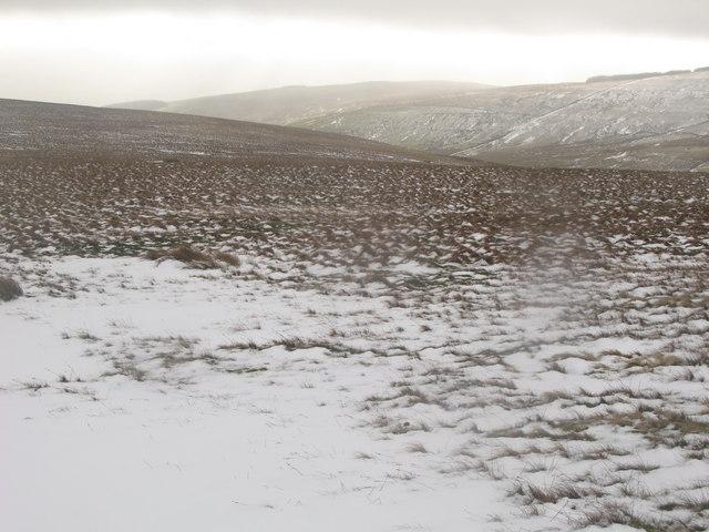 Moorland above Middlehope Burn (2)